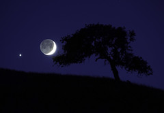 Venus and the Crescent Moonset (Omnitrigger) Tags: moon crescent venus crescentmoon moonset nature night nightphotography