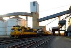 Grain train, Dunolly silos, Victoria (Diepflingerbahn) Tags: graintrain dunolly silos victoria gm10 b61 gm22 gm27 442s5 ssr southernshorthaulrailway yellow