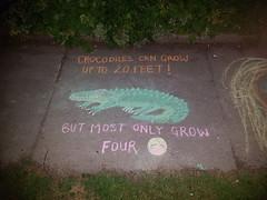 Dad Joke on the sidewalk (Fred:) Tags: dadjoke crocodile chalk drawings drawing sidewalk trottoir dessin dessins craie funny cute halifax novascotia westend kids children crocodiles dad joke 20 twenty feet