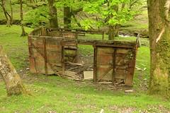 RSPB Gwenffrwd-Dinas (RoystonVasey) Tags: canon eos m 1855mm stm zoom wales dyffryn tywi valley rspb gwenffrwddinas reserve ystradffin oak woodland bluebell forest old railway carriage rural decay