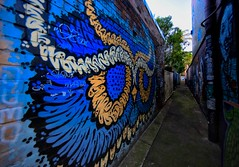 #6243 DASS Ln (Rmonty119) Tags: canon eos5dlll lightroom skylum colour blue laneway enmore dass 1124mm