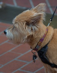Dog Profile (Scott 97006) Tags: dog canine animal pet profile head