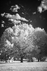 Beckenham Place Park (blackwoodse6) Tags: nikon ir infrared clouds monochrome trees white 850nm park london southlondon southeastlondon beckenhamplacepark londonparks outdoors foilage grass nikond70s blackandwhite