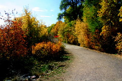Shelley Winter Walk6 (Jim Hollis) Tags: autumnfoliage cover curve paths roads trails wallhanging