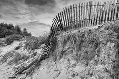 érosion (laurent.triboulois) Tags: sable bois blackandwhite