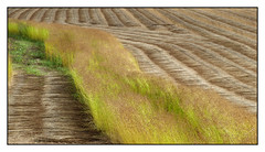 Lin sur l'autre -  Lin on the other (diaph76) Tags: extérieur france normandie seinemaritime cultures champs fields agriculture paysage landscape lignes lines