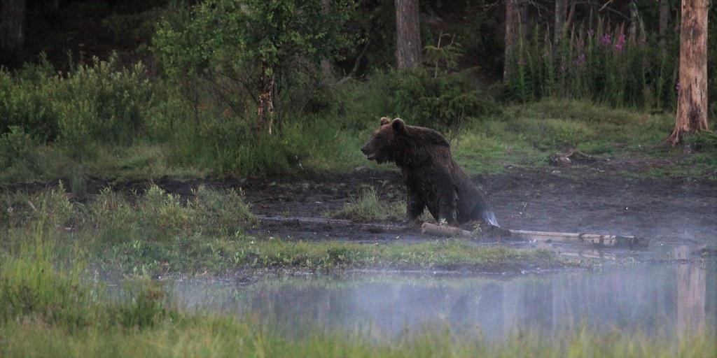 erilaisia muotoiluja yksityiskohtaiset kuvat ennakkotilaus The World's Best Photos of karhu and suomi - Flickr Hive Mind
