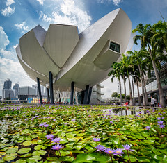 ArtScience Museum (high) (claustral) Tags: 2018 singapore asia architecture building artsciencemuseum lotus flower water pond sky panorama
