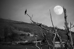 La fosca va creixent, la pau es multiplica ... (Pilonga) Tags: blancinegre experiments doubleexposure lluna creixent espera paisatge nocturn pardalot