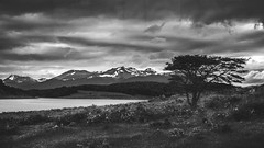 Estancia Harberton, Tierra del Fuego, Argentina (pas le matin) Tags: landscape paysage grass herbe sky ciel clouds cloudy nuage nuageux travel voyage world field mountain montagne monochrome tree arbre mer sea argentine argentina southamerica patagonie patagonia tierradelfuego terredefeu canon 5d canon5d canon5dmkiii 5dmkiii eos5dmkiii canoneos5dmkiii nb bw noiretblanc blackandwhite