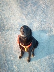 Wo bleibt das Frühstück?? (*Tom68*) Tags: hund dog black schwarz tier animal