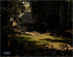 Angkor, Preah Khan Pond 20180203_134554 DSCN2744 (CanadaGood) Tags: asia seasia asean cambodia siemreap angkor khmer preahkhan temple tree pond archaeology canadagood 2018 thisdecade color colour