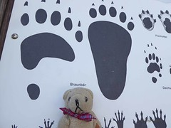 Danube9 Salzburg Wolfgangsee9 DT & Footprints (g crawford) Tags: danube salzburg crawford austria wolfgangsee dt dangerted teddy teddies bear teddybear teddys ted teds brownbear bruin footprint