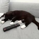 Tussi takes a nap... thumbnail