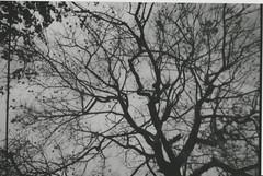 003.jpg (Tai Moura) Tags: preto branco black white konica vx400 film filme olympustrip100r lomo lomography lomografia