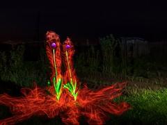 Pair of fiery garlic. (Nikolas Fotos) Tags: lightpainting llightpainting lightart longexposure lihgt longexposurephoto lichtmalerei lightpaintingphotography lichtkunst flowers nightshot nightphoto nightphotography nightscape night nightlights fiberoptic