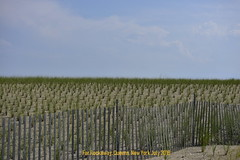 Nature's Fence (westmin87) Tags: farrockaway boardwalk queens nycferry