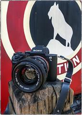 Sony + 55mm f:1.2 FD (NoJuan) Tags: cameraporn cameraportrait camera sonya7withmanualfocuslens sonya7ii canonfd canonlensporn vintagecanonlens manualfocuslens mirrorless