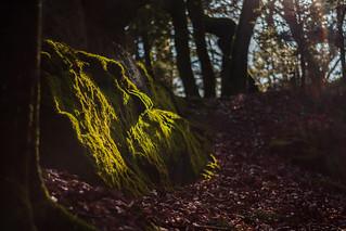 Moosbedeckter mystischer Stein