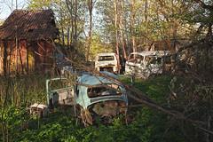 swedish spring (mariburg) Tags: rotten marode forgotten ruin decay desolate derelict cars rustycars auto canoneos6d canonef1635mmf4lisusm vwkäfer vw