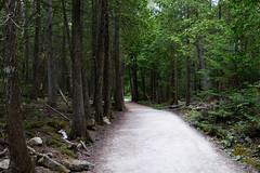 Making Trails (snedex) Tags: tobermory ontario canada ca hiking parkscanada brucepeninsula fathomfivenationalpark nationalpark trees forrest path