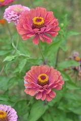 DSC_1513 (Konečná Marie) Tags: flowerwatcher