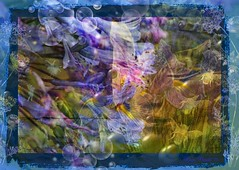 On the edge (Diana Thorold.) Tags: dianathorold psp 2018 flickr flamingpear texture manipulate photomanipulation colourful awardtree shockofthenew