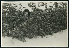Archiv P631 Ostsee Strandversteck, 1930er (Hans-Michael Tappen) Tags: archivhansmichaeltappen ostsee urlaub erholung fotorahmen strandbefestigung sand versteck strandversteck köpfe mann frau 1930s 1930er wind