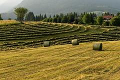 Lavori nei campi (maurizio.pretto) Tags: lavoro work campi field prati lawns fieno hay mountains montagne asiago italy