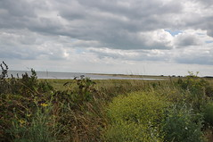 Pegwell Bay Country Park 1669 (Kent Country Parks) Tags: summer autumn spring pegwellbay country countryside kentcountryparks kent