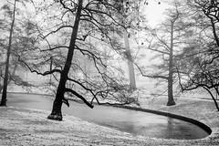 Parc de la Boverie - Liège (Belgium) (André Servaty) Tags: liège concours tirages parcdelaboverie lieux genre brouillard wallonie belgique be