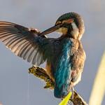kingfisher Maintenance thumbnail