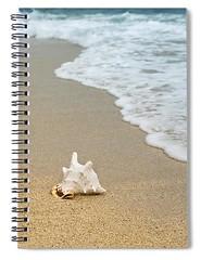seashell-carlene-smith (Fine Arts Designer) Tags: notebook notebooks writing write stationaery paper spiral