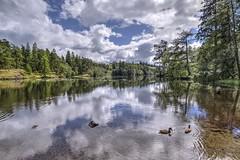 Coniston Tarn Hows, Cumbria...#LakeDistrict #Cumbria #Coniston #TarnHows #NaturalBeauty #Landscape #HDR #Bracketing #Poloriser #Lake #BlueSky #Clouds #Ducks #Trees #Lakeside #Lakeshore (cris.gerrard) Tags: trees hdr lakedistrict naturalbeauty cumbria bracketing poloriser lake bluesky clouds landscape ducks lakeshore lakeside coniston tarnhows