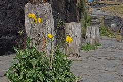 IMG_4021_edited-1 (Lofty1965) Tags: boscastle cornwall post yellow harbour