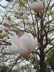 a (16) (hiromi89) Tags: japan beauty beautiful scenery flower wood pond