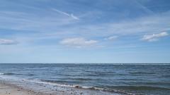 032-P1030577 LR (1gl) Tags: 2018 carpet carpets killer gumbo norfolk wintertononsea beach dogs coast