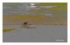 SHF_0119 (Tuan Râu) Tags: 1dmarkiii 14mm 100mm 135mm 1d 1dx 2470mm 2018 50mm 70200mm canon canon1d canoneos1dmarkiii cs6 huế đầmchuồn thuyền boat nhà lều mây hồnước chântrời tuanrau tuấnrâu2018 râu tuan httpswwwfacebookcomrautuan71