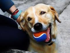 Perro promotor de la Pepsi. (FOTOS PARA PASAR EL RATO) Tags: cdmx juegos perro mascota animal sonrisa pelota perros dogs