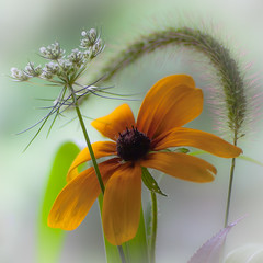 colours of August (marinachi) Tags: yellow green white black purple multicolour macromonday flowers august macro closeup