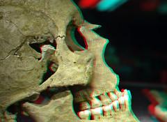 Skull Museum Haarlem 3D