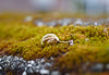 Shriveled Leaf Mossy Stone Ledge (Orbmiser) Tags: mzuikoed1240mmf28pro 43rds em1 mirrorless olympus ore portland m43rds stone moss seed macro