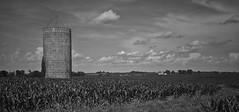 the last bastion....(HMM) (BillsExplorations) Tags: monochromemonday blackandwhite sky clouds silo lone cornfield field green illinois lanark ruraldecay country rural