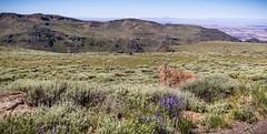 Big Indian Canyon, Steens Mountain Wilderness (BLMOregon) Tags: blm bureauoflandmanagement steens mountain wilderness oregon bigindian canyon gorge donnerundblitzen donnerandblitzen