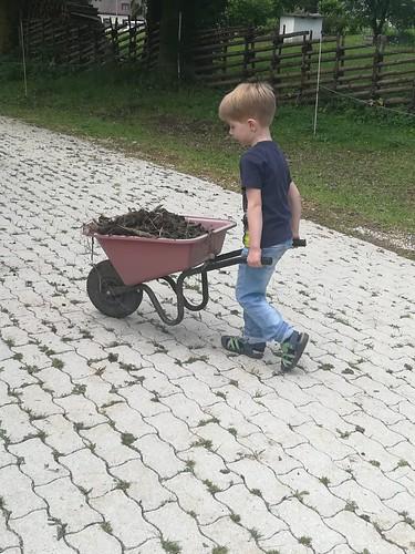 Lauri bei der Stallarbeit