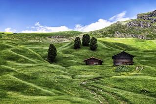 Sunny Alpine Meadow