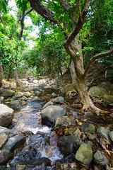 DSC_1852 (sch0705) Tags: hk hiking shuilochostream lantau stream