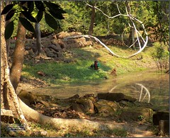 Angkor, Preah Khan Forest 20180203_131920 DSCN2721 (CanadaGood) Tags: asia seasia asean cambodia siemreap angkor khmer preahkhan temple people person pond tree building architecture archaeology canadagood 2018 thisdecade color colour