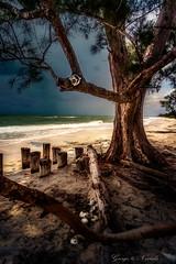 Storm approaching beach (George Nevrela) Tags: thunderstorm beach storm tree waves ocean gewitter wellen baum skelett skelleton fineart landscape landschaft strand nevrela georgenevrela
