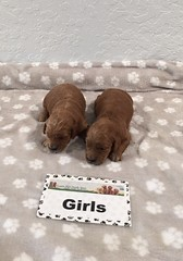 Gretta Girls pic 2 8-4